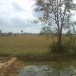 und der Teich ...